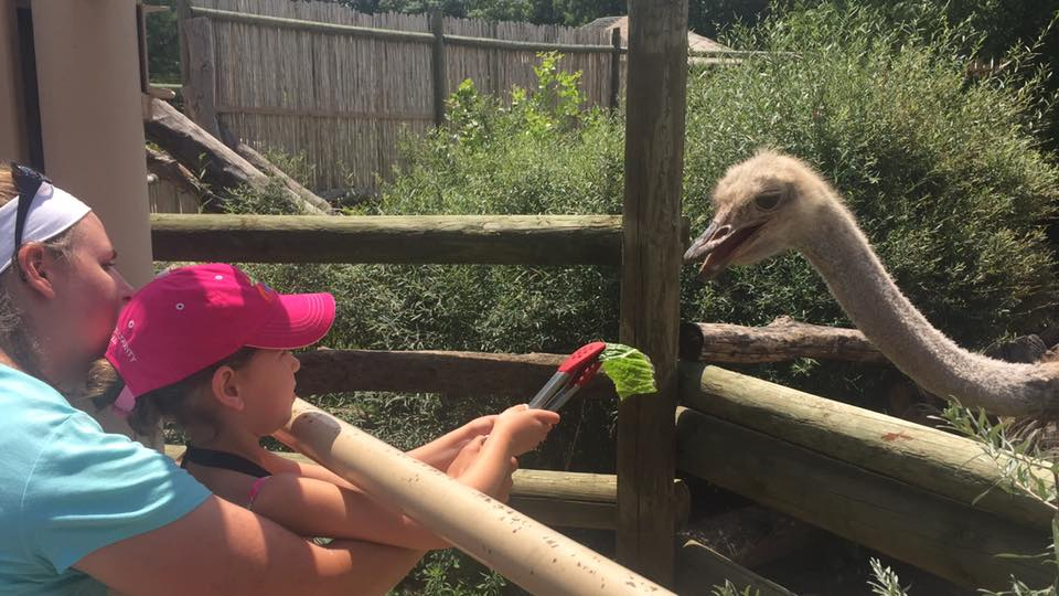 Blank Park Zoo Calendar : Zoo interactions feeding the animals with us